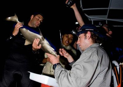 Shark conservation work