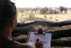 Volunteer جنوب إفريقيا
